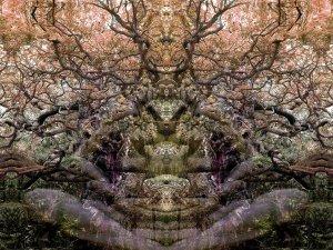 Herfst meditatie
