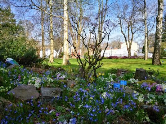 Botanische Tuin Delft : Botanische tuin delft space van ronald